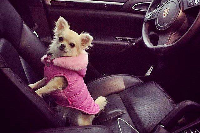 Mau Anjing Ras Atau Anjing Campuran Serta Gambar Wallpaper Anjing Paling Cantik Dan Lucu Untul Ponsel Hp