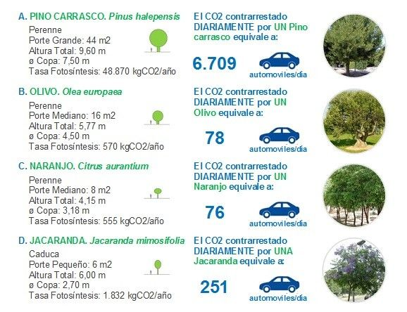 Fundamentos para projetar espaços públicos confortáveis,Prancha 3. Capacidade de absorção de CO2 de algumas espécies arbóreas. Imagem Cortesia de Enrique Mínguez Martínez, Pablo Martí Ciriquián, María Vera Moure