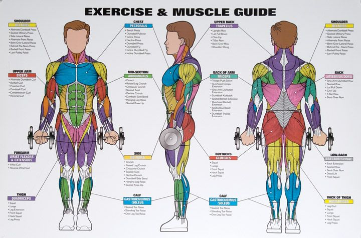 similiar exercises by muscle group chart keywords, Cephalic Vein