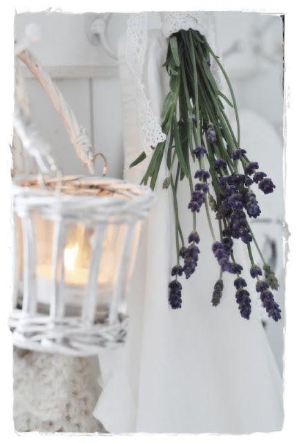 260 besten Lavander Bilder auf Pinterest   Lavendelfelder ...