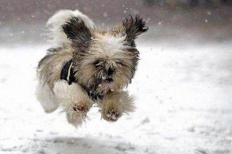 H παρέα του Επταπυργίου : Προστάτεψε τον σκύλο σου από το κρύο