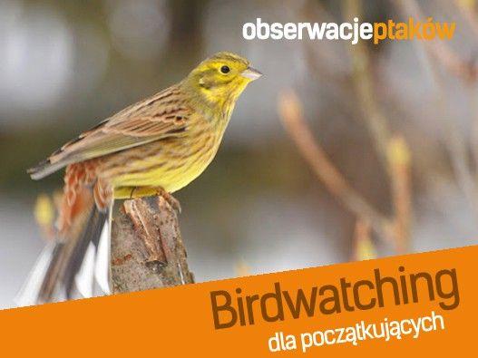 Najlepsze wycieczki w Bieszczady i nie tylko. | Birdwatching dla początkujących