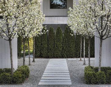 Entry Courtyard - contemporary - landscape - san francisco - Terra Ferma Landscapes