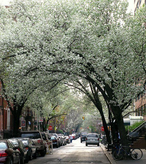 NYC. Charles St., West Village // Flickr by venetia  27