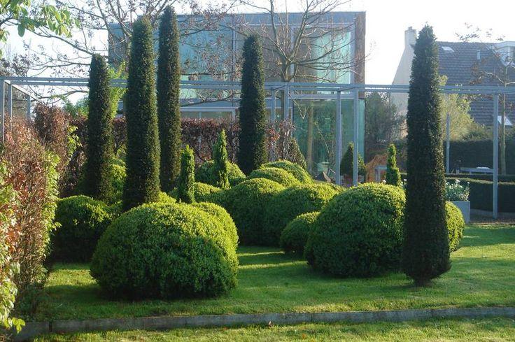 Buchsbaumkugeln und Eibe (Taxus) geben diesem Garten einen unverwechselbar modernen Charakter. Foto: BGL