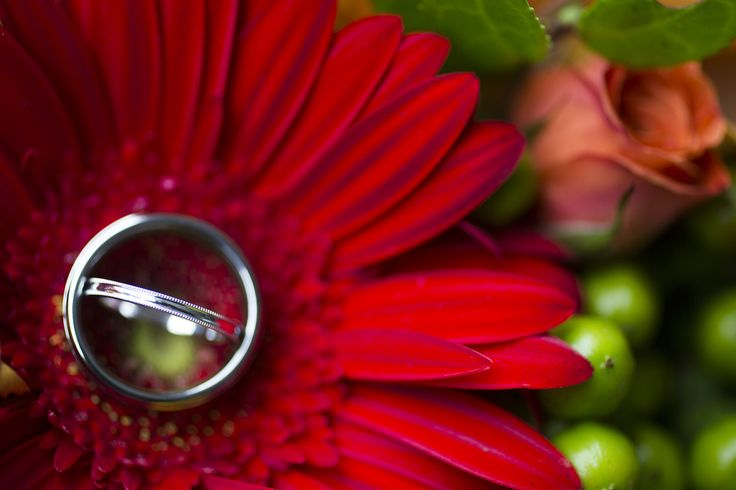 Wedding rings, wedding bands on gorgeous red flowers in Mathews County, VA by Gloucester photographer Heather Hughes Photography.