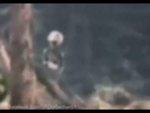 ✔ufo-aliens- videos reales - YouTube