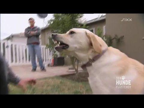 Tipps: Hund hört nicht, ignoriert mich draußen – Aufmerksamkeit Bindungsübung Hundetraining - YouTube