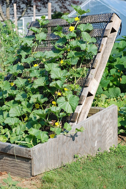 Melon trellis using palette by KGI.ORG, via Flickr
