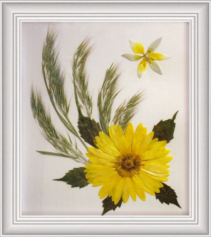 Evelyn Ruhnke Pressed Flowers Algona, Iowa 50511