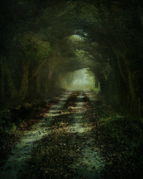path.The Roads, Trees Tunnel, Dark Beautiful, Art, Duckbill Platypus, Duck-Bil Platypus, Dark Side, Tree Tunnel, Robert Frostings
