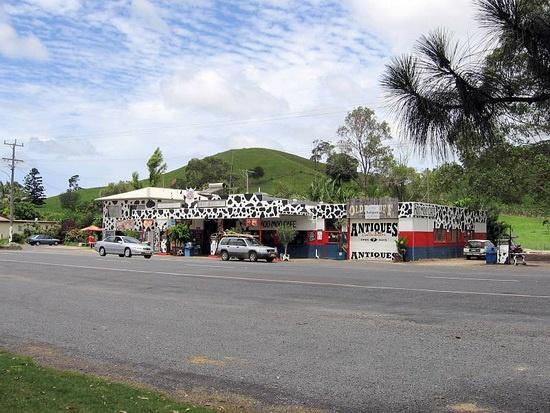 Cow print in Mooball, Australia.