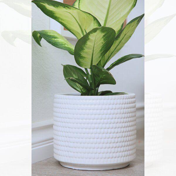 Lesa Ceramic Pot Planter Planter Pots Planter Pots Indoor Planters