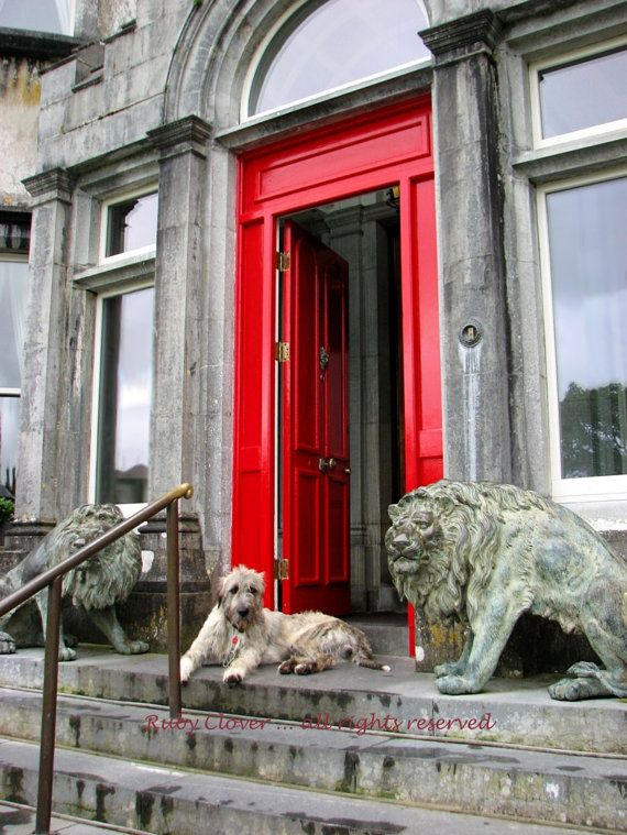 IRISH WOLFHOUND Photo Red Door Ballyseede Castle Co. by rubyclover (Art & Collectibles, Photography, Color, wolfhound, kerry, dog photography, dog lover, lion statue, animal lover photo, gift for dad, irish pride, red door photo, irish photo, castle photo, gift for man, ireland photo)