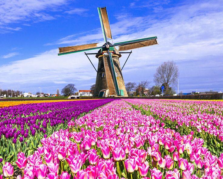 Ha végigjártad Amszterdam látnivalóit, fedezd fel a város környékét is. Kevesebb, mint 30 perc alatt rengeteg különböző élményben lehet részed a fenséges szélmalmoktól a híres tulipán mezőkön át, az északi tengerparti élményekig. Lássuk, milyen sokszínű programok várnak rád Amszterdam szomszédságában! Fedezd fel a régi, holland szélmalmokat Egy hollandiai, de még egy amszterdami utazás sem lehet …