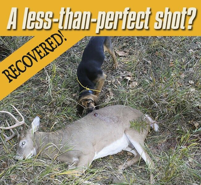 How To Train Your Dog To Track A Wounded Deer