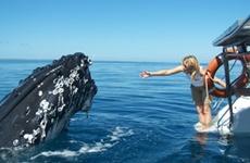 Fraser Coast QLD - Fraser Island Tours, Hervey Bay Accommodation & Hinterland Holidays, Queensland - Tourism Fraser Coast QLD