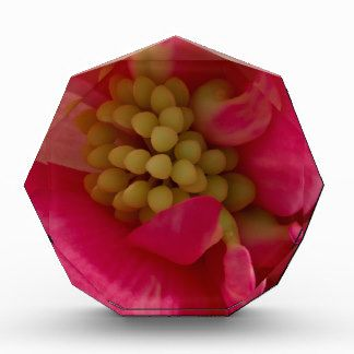 Pink Begonia Stamen Macro Gift Award