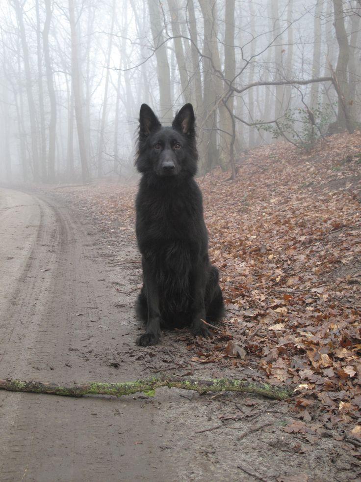 """""""Wolf"""" - *Renzo*  --  [Photograph by ~Draxorr (Helen) - September 20 2009 on deviantART]'h4d'121020"""