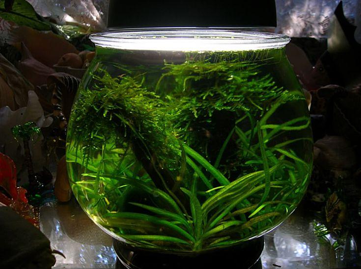 10 best images about pet on pinterest mini aquarium for 10 gallon fish bowl