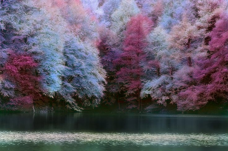 7 Lakes, Bolu, Turkey - The Purple Forest - gotta go to the forest named after my favourite colour.