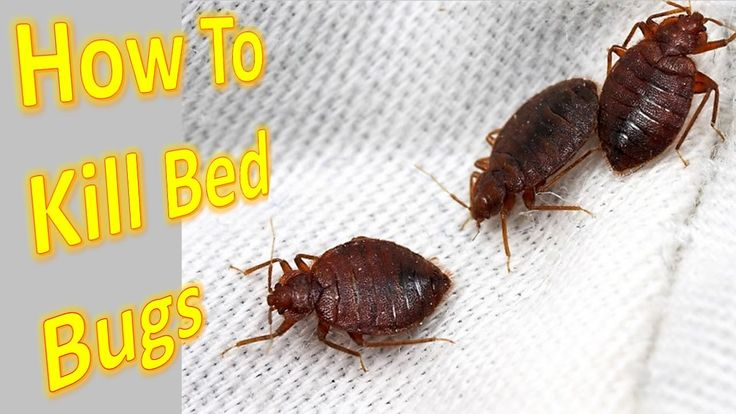 How to kill red bed bugs in the house - home made easy lifehacks 2017