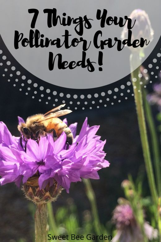 Want a beautiful garden AND one that supports our bees? From size to color, learn the 7 basic things that every pollinator garden needs!