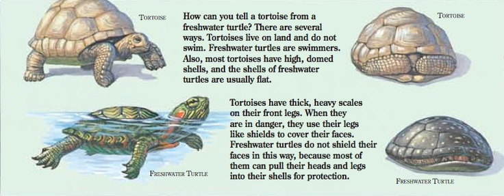 how can you tell the difference between a turtle and a tortoise