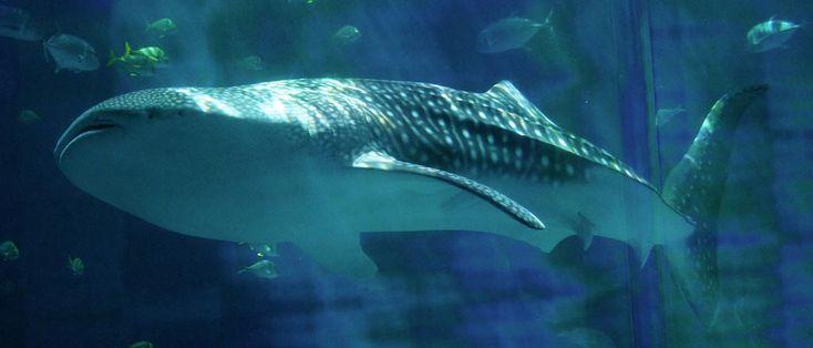 Exotic Fish Aquarium Miami