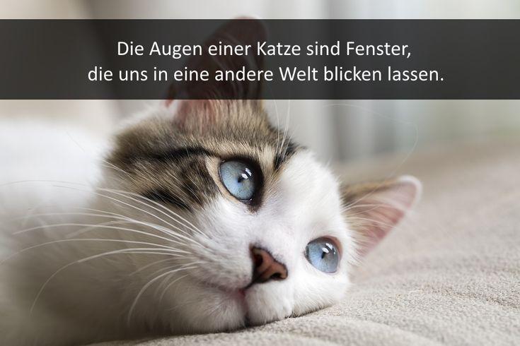 93 Best Katzensprüche Images On Pinterest