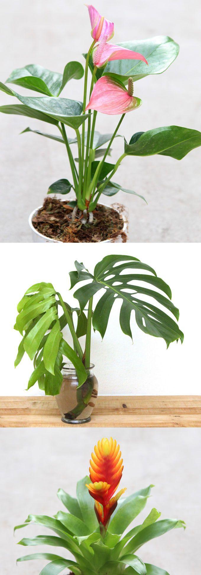indoor plants nasa - photo #26
