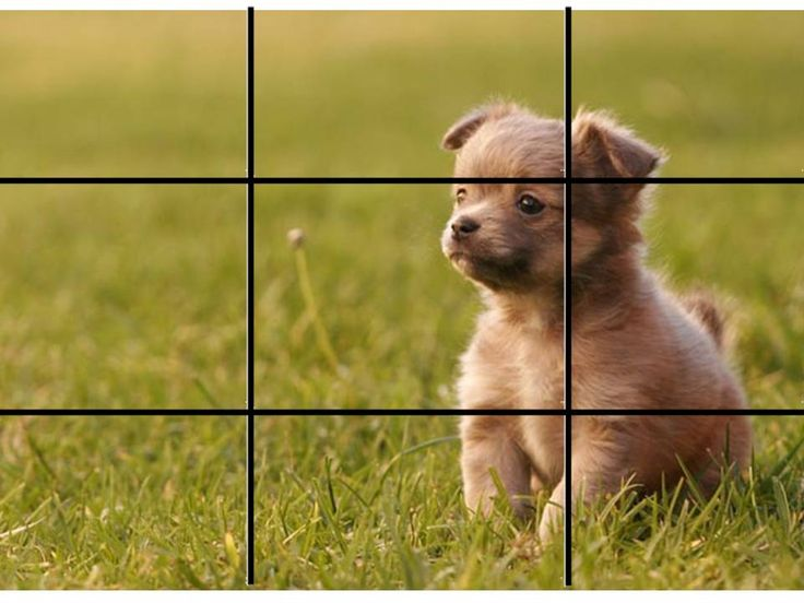 This is rule of thirds because it has a puppy on the right side in the places…