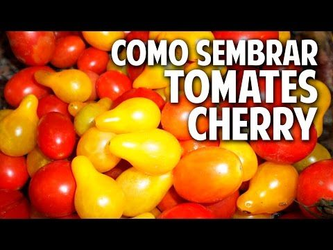 Paso a Paso y para principiantes como sembrar tomate cherry @cosasdeljardin - YouTube