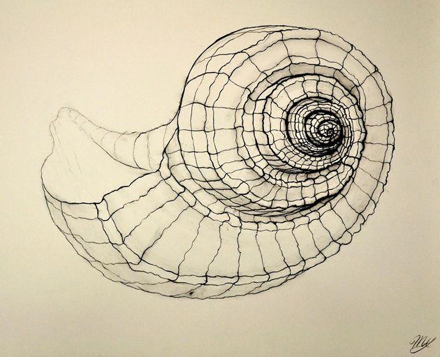 рисунок ракушек графика