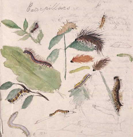 From the Victoria and Albert Museum: At the age of 8 Beatrix Potter was already studying and recording the characteristics of a wide variety of animals, birds and insects in a home made sketchbook.