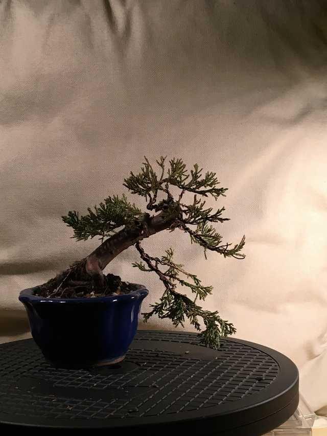 Tucson Bonsai Society Show 2015 In 2020 Bonsai Take Me Up Imgur