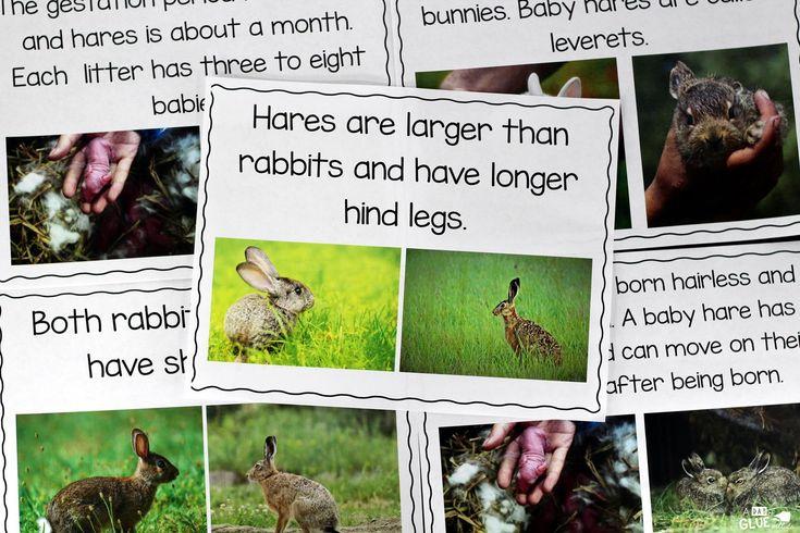 Rabbit Facts : An Animal Study