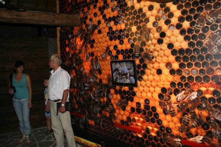 galeria: Galeria, I'M, Beekeeping