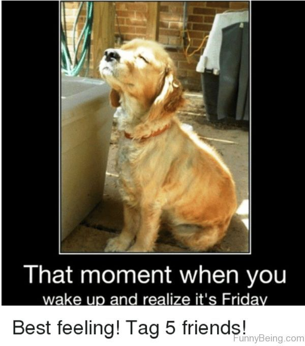 That Moment When You Wake Up Friday Meme Friday Dog Its Friday Quotes Friday Meme