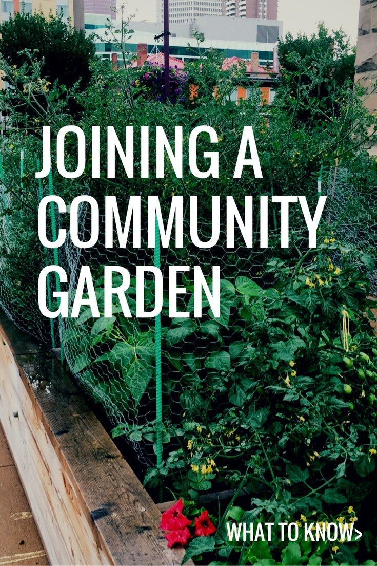 What It S Like To Join A Community Garden Gardening