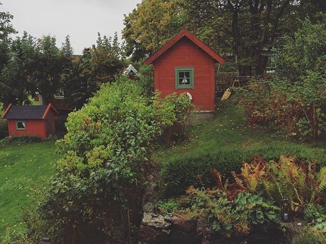Den är inte stor, men väldigt mysig, vår lilla djungel. 🍃  #stövelväder #trädgård #minträdgård #mitthem #garden #housedjungle #höst #uthus #lillstugan #lekstuga #ormbunke #syren #etage #regn