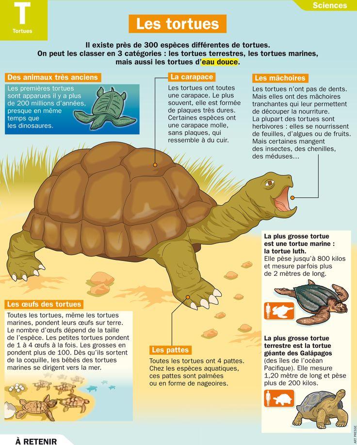 Fiche exposés : Les tortues                                                                                                                                                                                 Plus