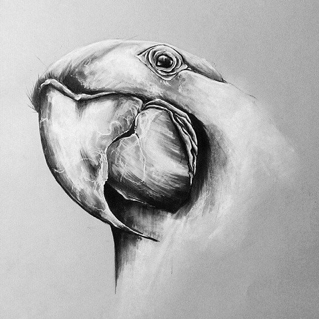 185 mejores imágenes de Birds en Pinterest  31807e32aea83