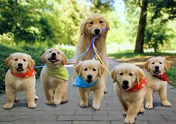 Trotse honden met hun kleine puppy's