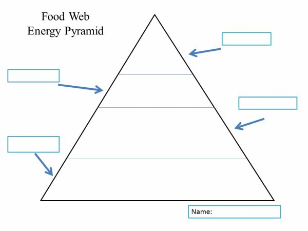 Best 25+ Ecological pyramid ideas on Pinterest | 5th grade science ...
