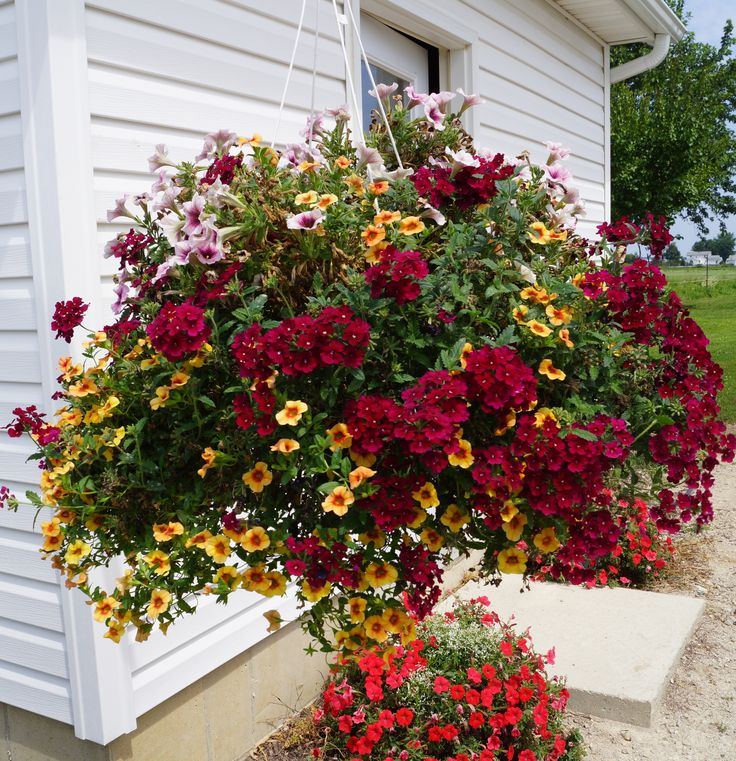 Best Flower Combinations For Hanging Baskets : Best flowering combos images on flowers