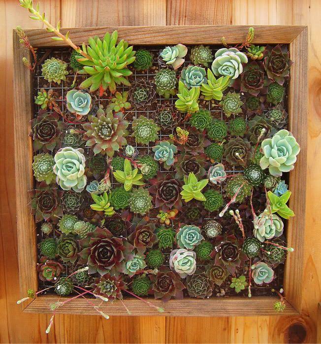 311 best Vertical Gardens images on Pinterest Plants Gardening