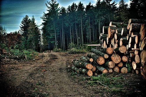 Sebutkan 5 Contoh Kegiatan Manusia Yang Dapat Menurunkan Keanekaragaman Hayati? | Gambar Deforestation