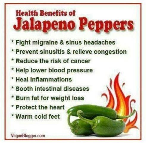 Jalapeño peppers are medium-sized chili peppers with a mild to moderate amount of heat. Jalapeños can be pickled and served as a condiment and they are widely used in making salsas, sauces, and bottled hot sauces. How do you like them?
