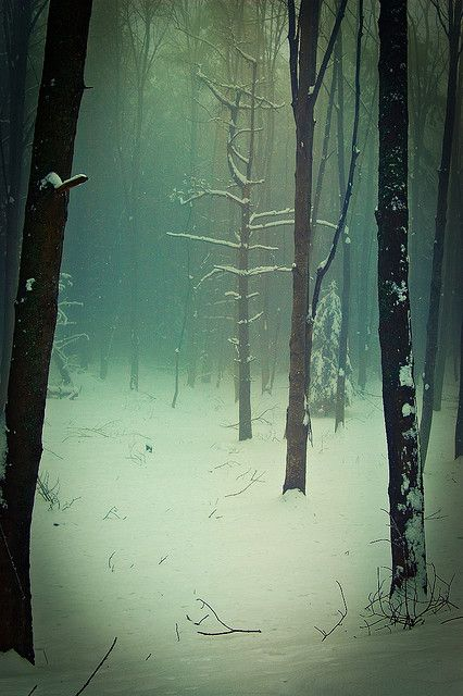 green-tinted snowy woods